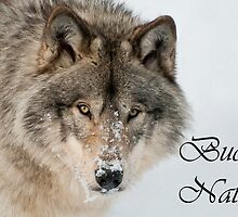 Timber Wolf Christmas Card Italian 9 by WolvesOnly