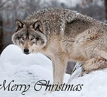 Timber Wolf Christmas Card English 10 by WolvesOnly