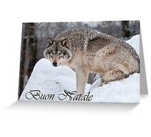 Timber Wolf Christmas Card Italian 10 Greeting Card