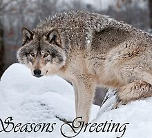 Timber Wolf Seasons Card 10 by WolvesOnly