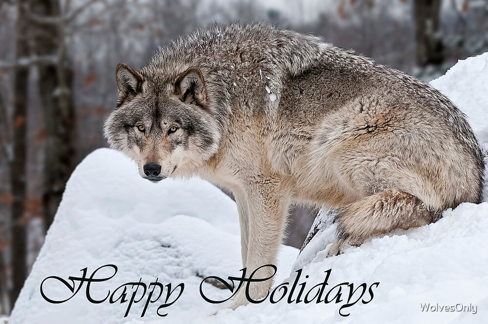 Timber Wolf Holiday Card 10 by WolvesOnly