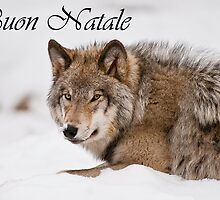 Timber Wolf Christmas Card Italian 11 by WolvesOnly