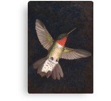 Exaltation - Ruby-Throated Hummingbird Canvas Print