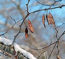 Snowy Branch by Susan S. Kline