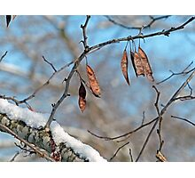 Snowy Branch Photographic Print