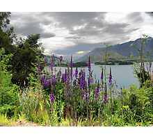 Queenstown Through Lupin and Lythrum Photographic Print