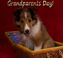 Grandparents Day Sheltie by jkartlife