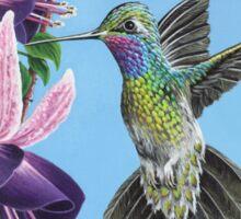 Hummingbird and Fuchsias Sticker