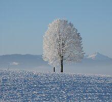 Frozen Tree by Lucie Rovná