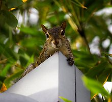 The Squirrel's Perch by Brianna da Silva
