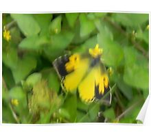 A Sulphur Butterfly Poster