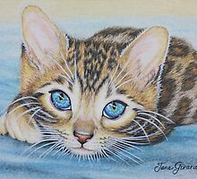 Bengal Kitten by Jane Girardot