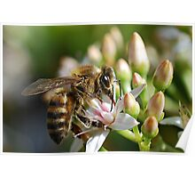 Bee On Sip Poster