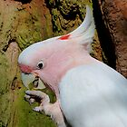 Pink Cockatoo Snack Time by Margaret Saheed