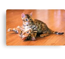 Bengal Kittens at Play Canvas Print