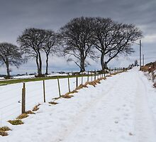 Snowy Track by PersleyPhoto