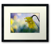 daffodil dreaming Framed Print
