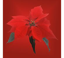 Christmas Red Photographic Print