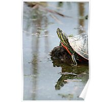 Painted Turtle on Mud in a Marsh Poster