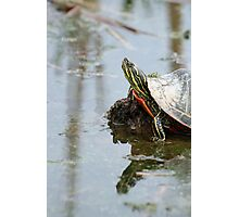 Painted Turtle on Mud in a Marsh Photographic Print