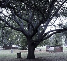 Limbs of Remembrance Artistic Photograph by Shannon Sears by twobrokesistas