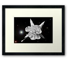 Look into the Fuchsia. Framed Print