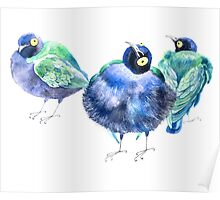 Funny exotic birds Poster