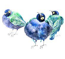 Funny exotic birds Photographic Print