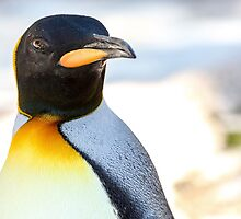 King Penguin by Mark Hughes
