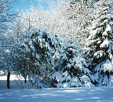 Winter Wonderland-Snow by MaeBelle