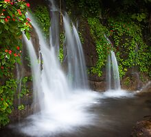 Jungle waterfall and flowers at Juayua, El Salvador by jjkingan