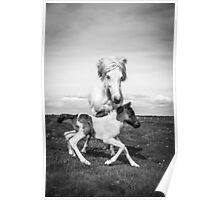 Mama horse and newborn foal in field of flowers Poster