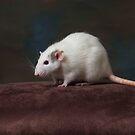 Millie - Dumbo Rat by sogr00d