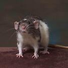 Polaris - Dumbo Rat by sogr00d