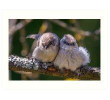 """""""Snuggling Siblings"""" -- Bushtits Art Print"""