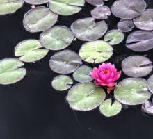 Water Lily Flower Sticker