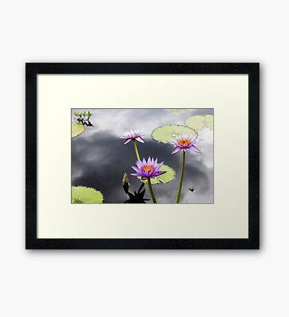 Water Lily Flower 2 Framed Print