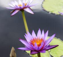 Water Lily Flower 2 Sticker