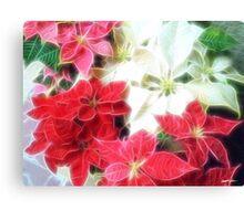 Mixed color Poinsettias 1 Angelic Canvas Print