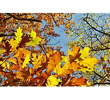 Autumn Leaves & Clear Sky Photographic Print