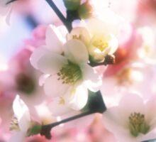 Beautiful White Pink Sakura Cherry Blossoms in Spring Sticker