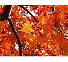 Autumn in Memphis  Photographic Print