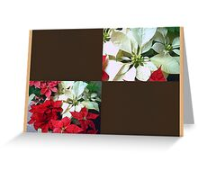 Mixed color Poinsettias 1 Blank Q3F0 Greeting Card
