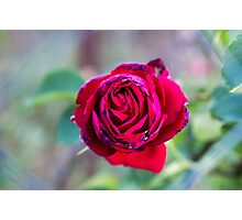 Wire Rose Photographic Print