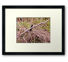 A Bird in the Brush Artistic Photograph by Shannon Sears Framed Print