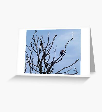 Crown of Limbs Artistic Photograph by Shannon Sears Greeting Card