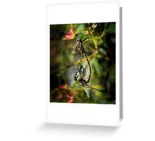 Dragonflies on Xmas Bush Greeting Card