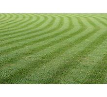 Green grass pattern. Photographic Print