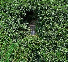 Ivy covered window. by FER737NG