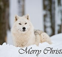 Arctic Wolf Christmas Card 2 by Michael Cummings